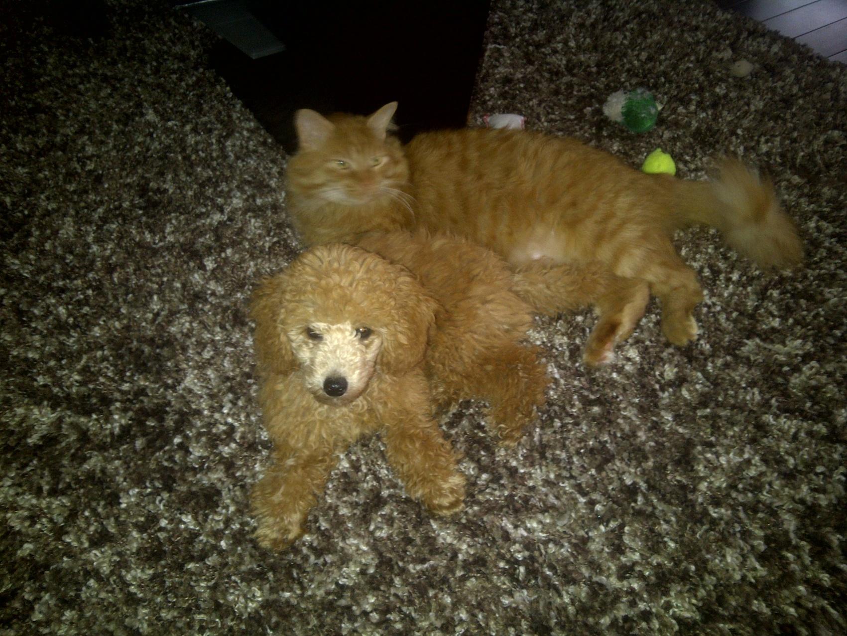 Rusty Cat Carpet