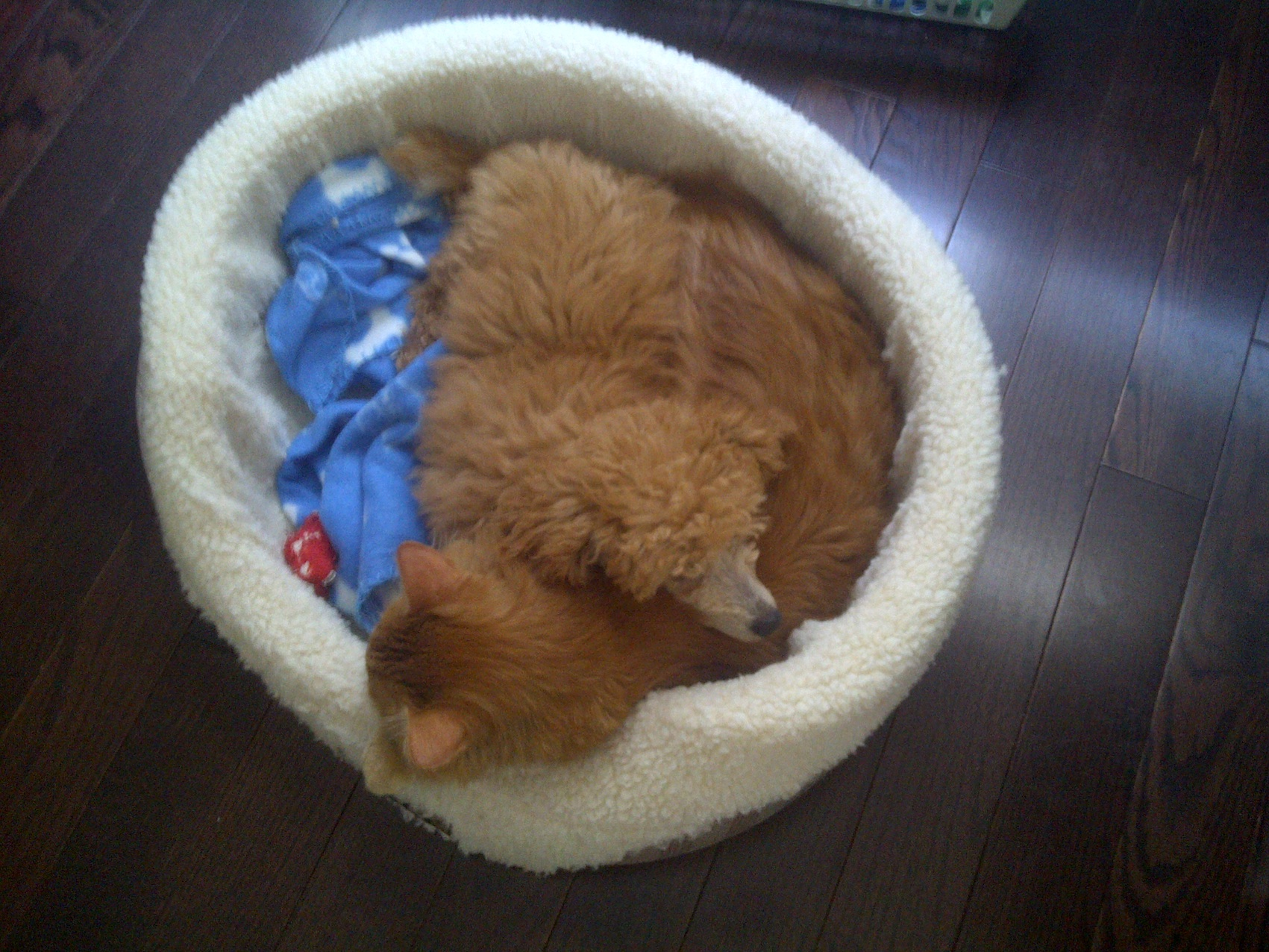 Rusty cat bed